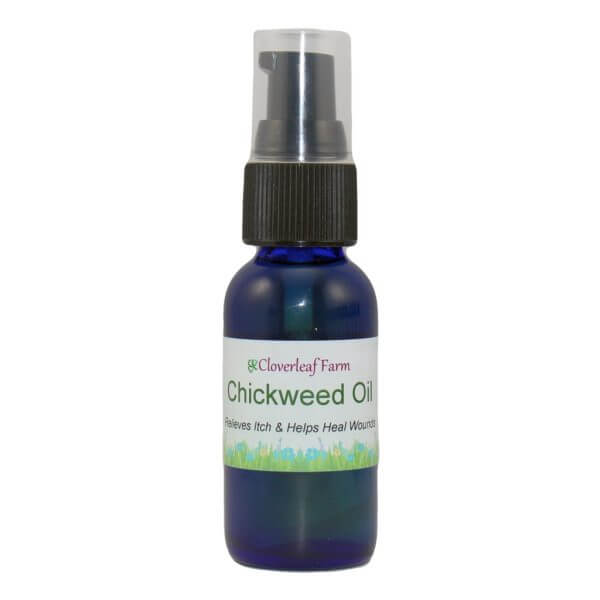 Chickweed Herbal Infused Oil